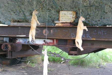 PETA TNR反対