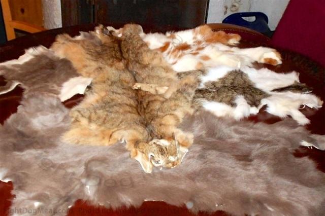 猫毛皮スイス