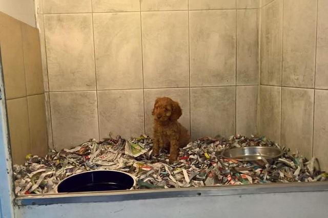 イギリス ペットショップ 犬