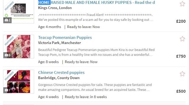 イギリス 犬 インターネット販売