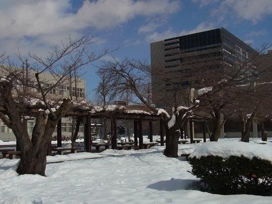 雪ノキャンパス
