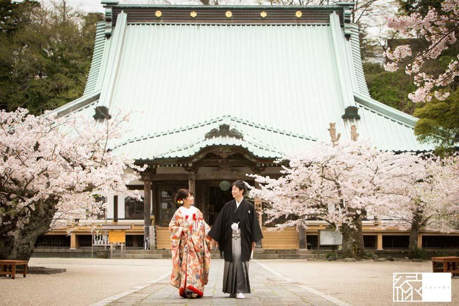 和装前撮り桜鎌倉縁27