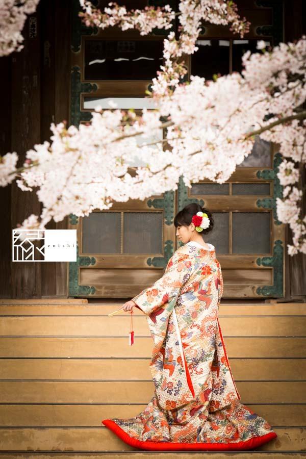 和装前撮り桜鎌倉縁16