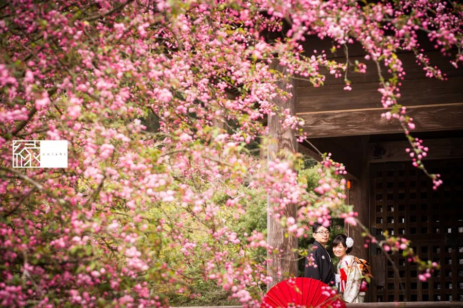 和装前撮り桜鎌倉縁30