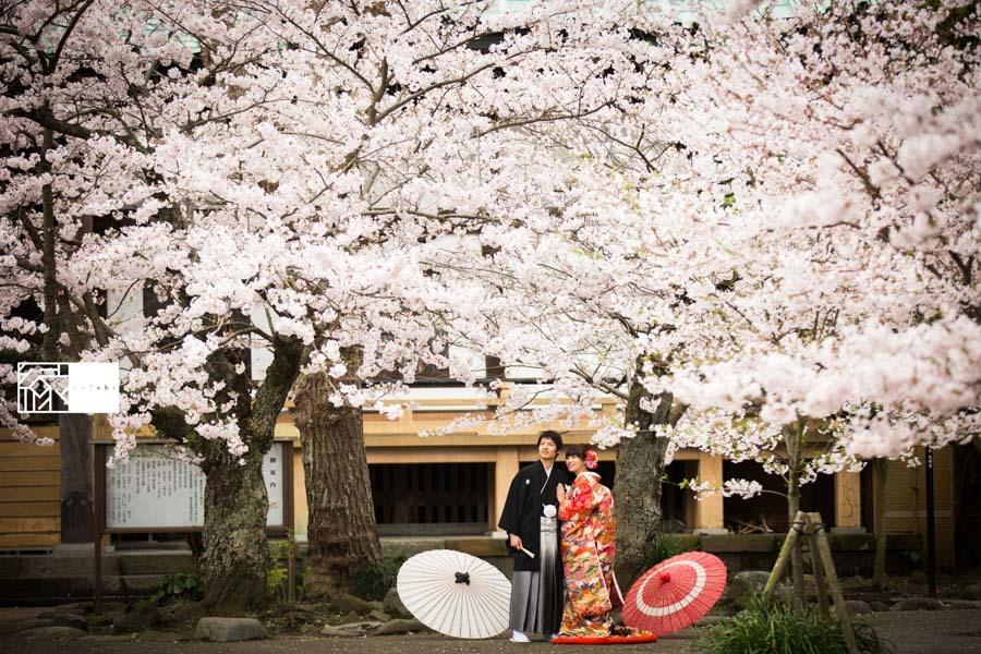 和装前撮り桜鎌倉縁11