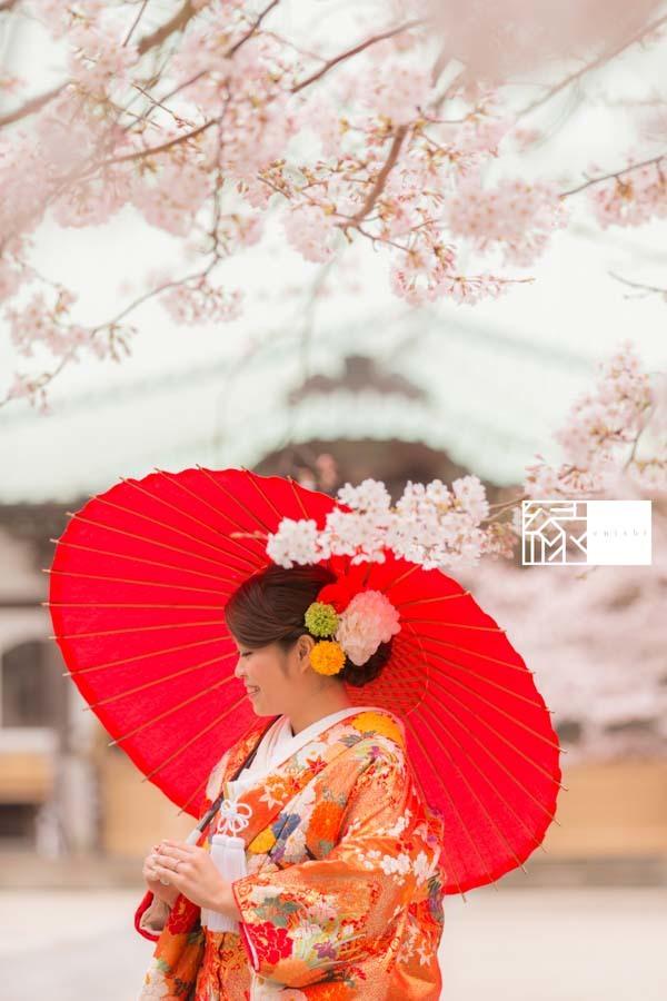 和装前撮り桜鎌倉縁07