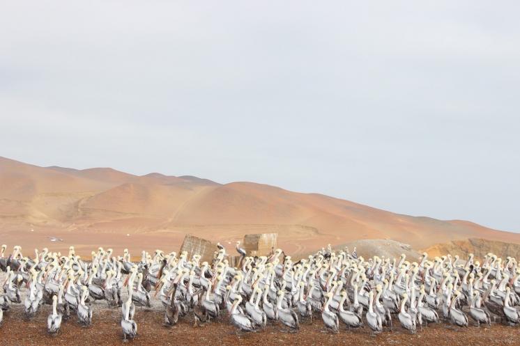 ペルー0006