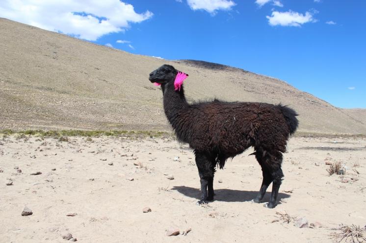 ペルー0000001