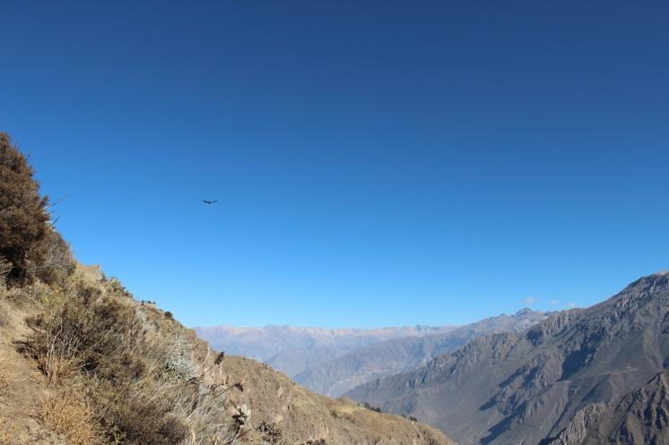 ペルー00000008