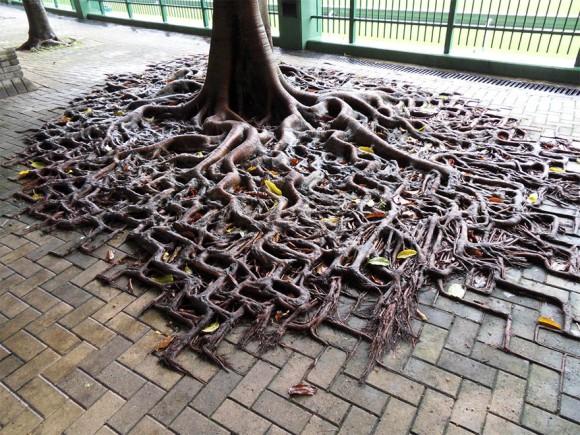 2017 bb ブロックに沿って根を張る木