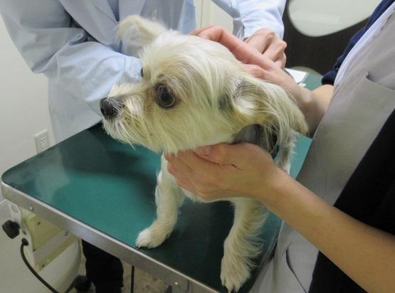 6B04 犬5種混合ワクチン 1109