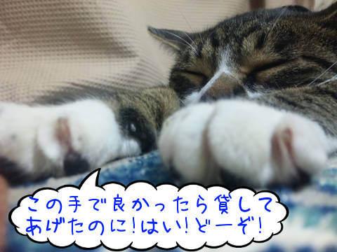 SH3805592016111609.jpg