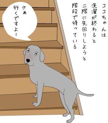 階段で待つラブラドール