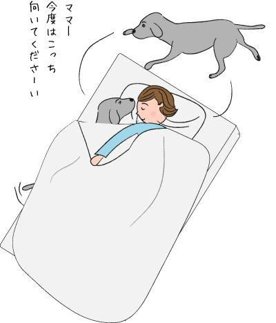 ラブラドールの寝返り