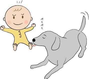 赤ちゃんとラブラドール
