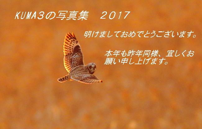 BX1D7734-2.jpg