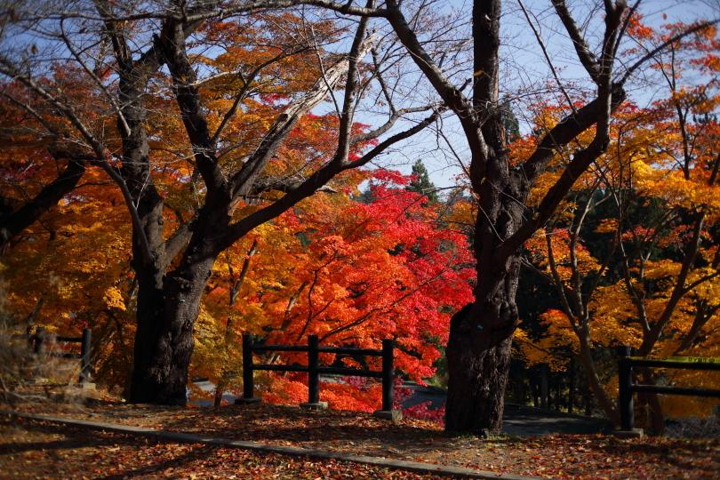 2016_1113_oshiro09.jpg