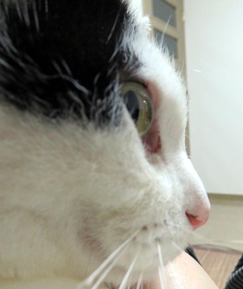 ちっぷの横顔の鼻