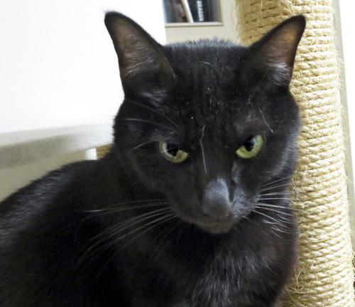 ホコリが目立つ黒猫チョコ