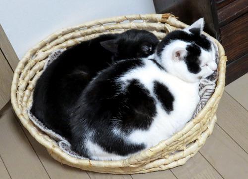籠で眠るちっぷとチョコ
