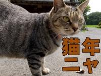 猫年ニャ!
