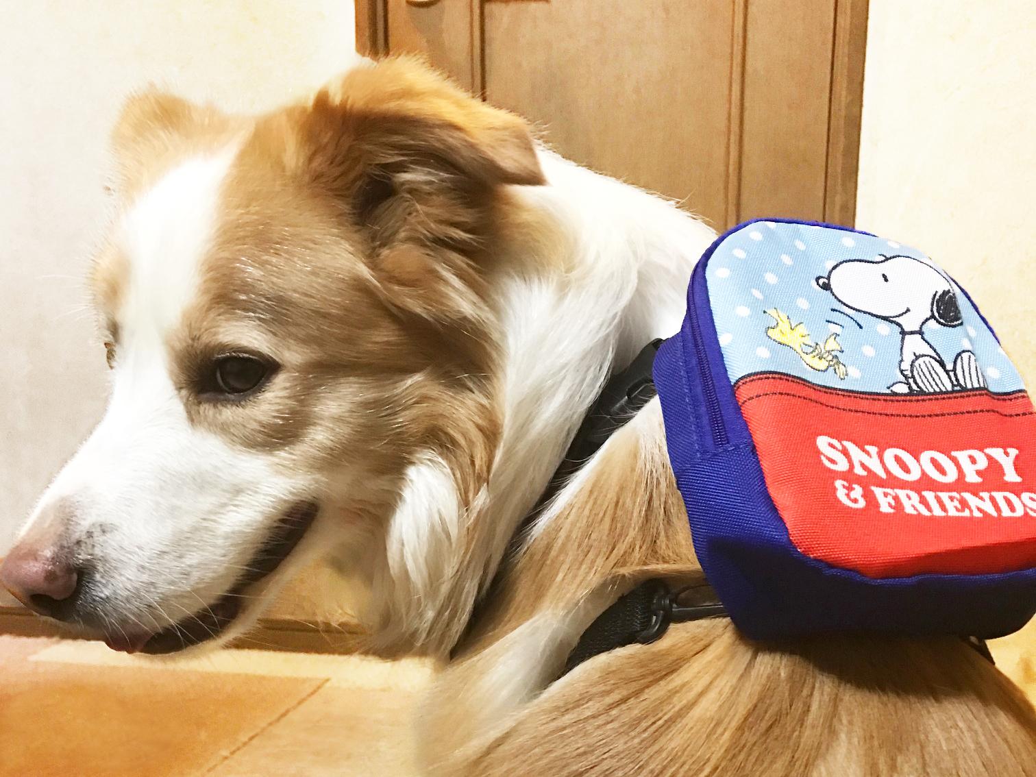 犬のきもちの付録