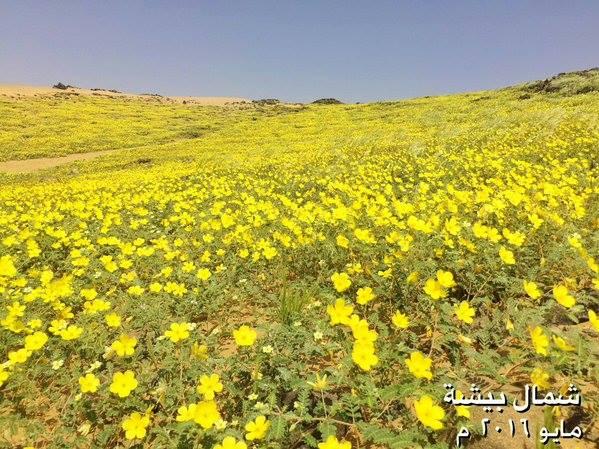 flower-desert-saudi-arabia-1.jpg