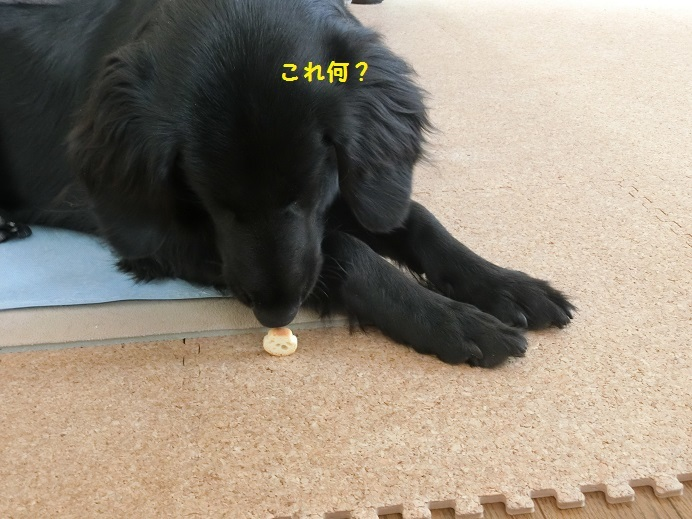 CIMG2849.jpg