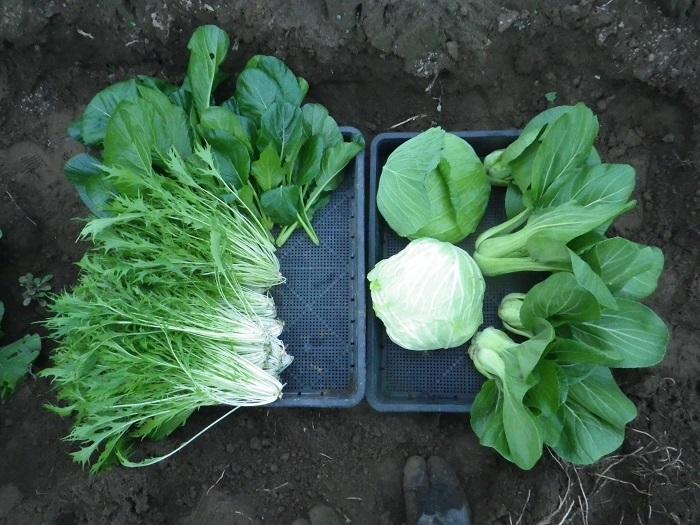 収穫2_16_11_20