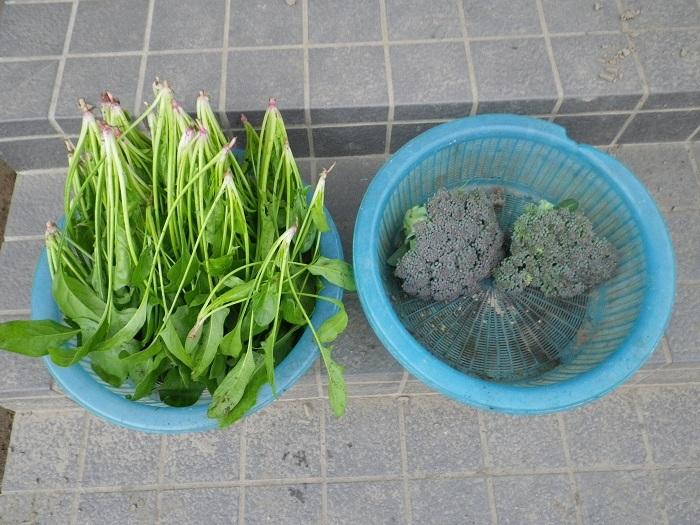 収穫1_16_12_09