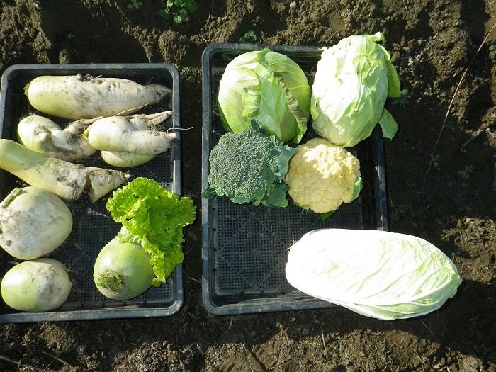 収穫1_16_12_24