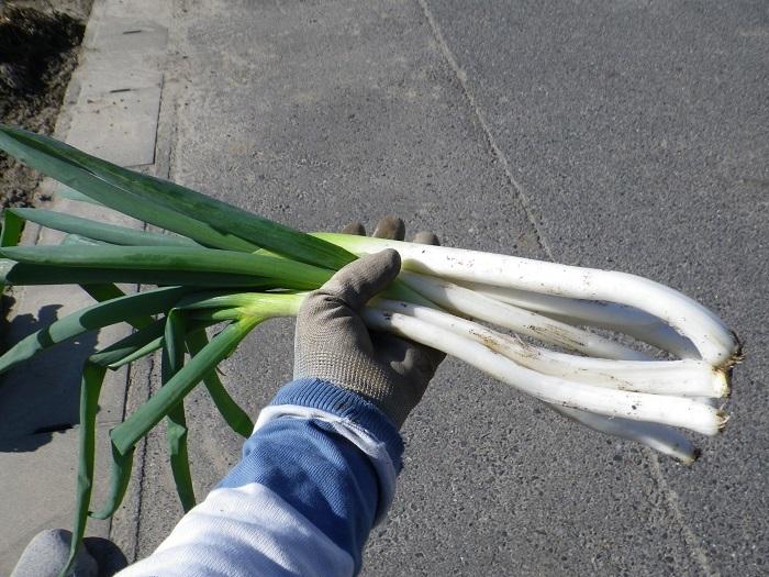 収穫1_17_01_07