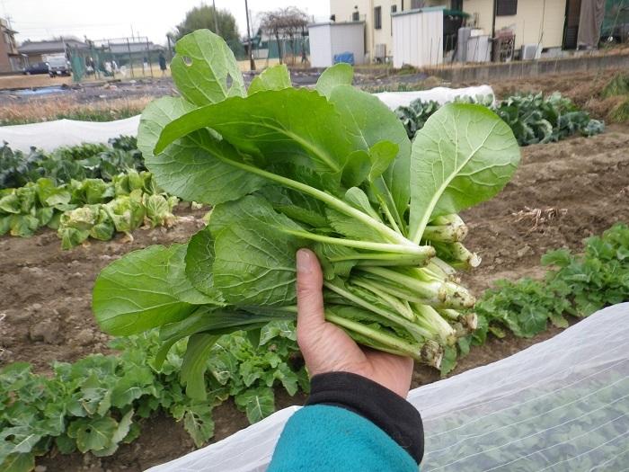 収穫1_17_01_08