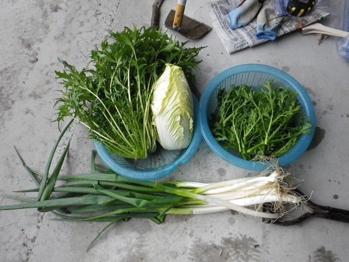 収穫2_17_01_08