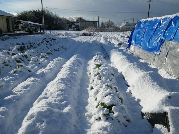 雪景色17_01_14