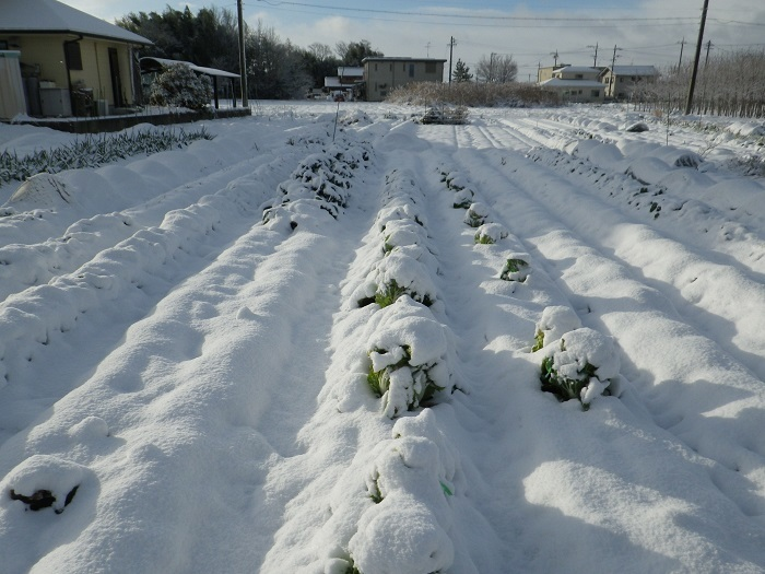 雪景色1_17_01_15