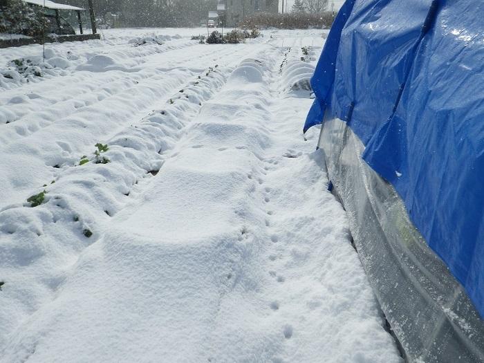 雪景色2_17_01_15
