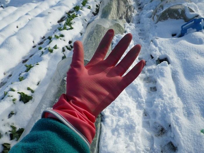 手袋17_01_15