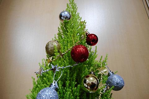 コニファーのクリスマスツリー