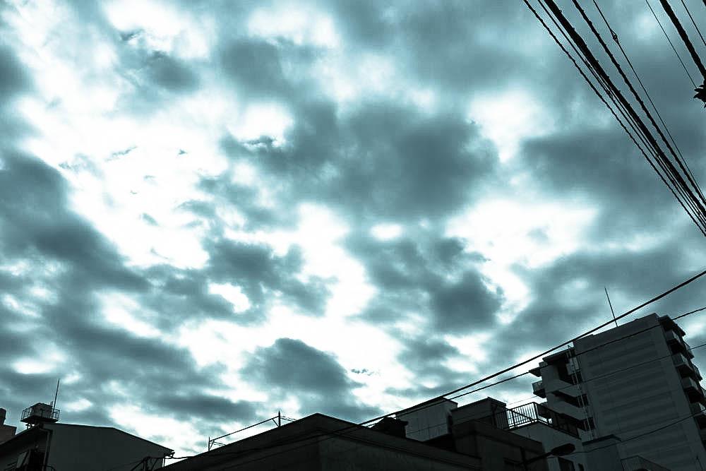 IMG_2520-1000.jpg