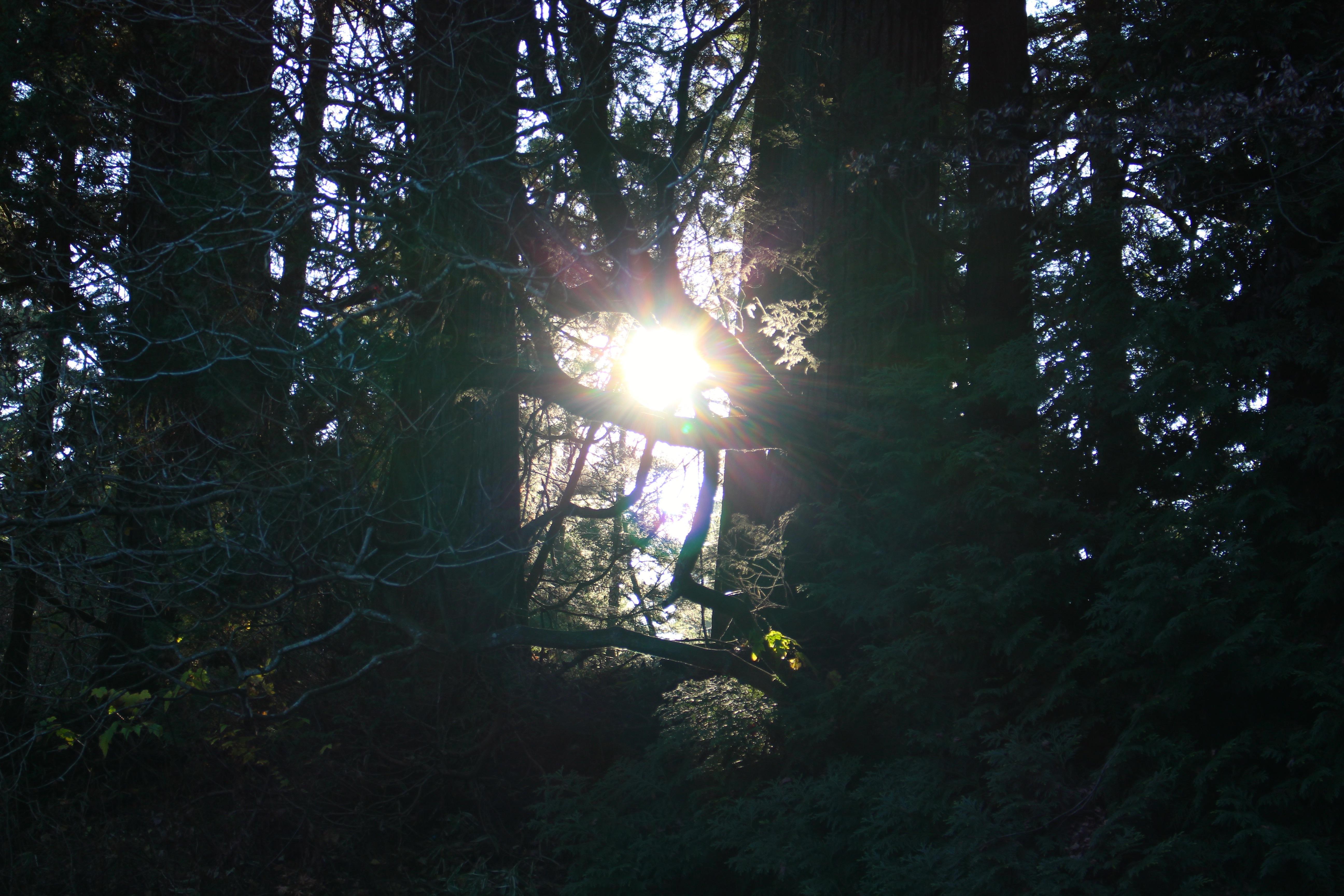 20161128太陽の光