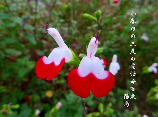 ドレスアップする花