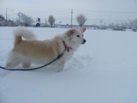 雪中散歩往路IMG_7292