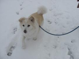 雪中散歩復路IMG_7298