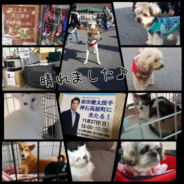 PhotoGrid_1480207544468.png