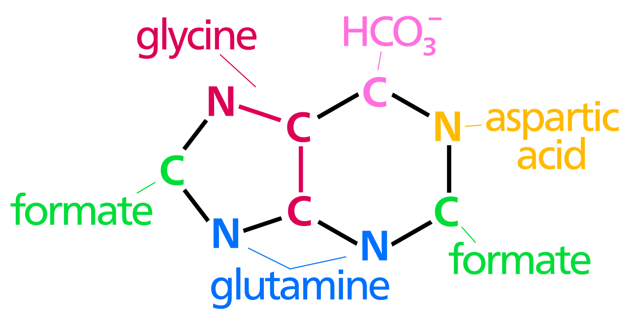 Nucleotide_synthesis.png
