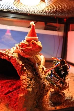 1128クリスマス準備1