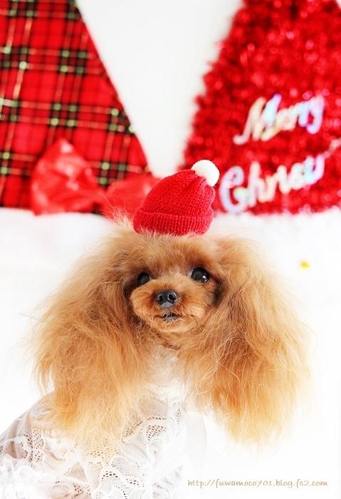 チビプードルモコの毎日☆みるくクリスマスA☆