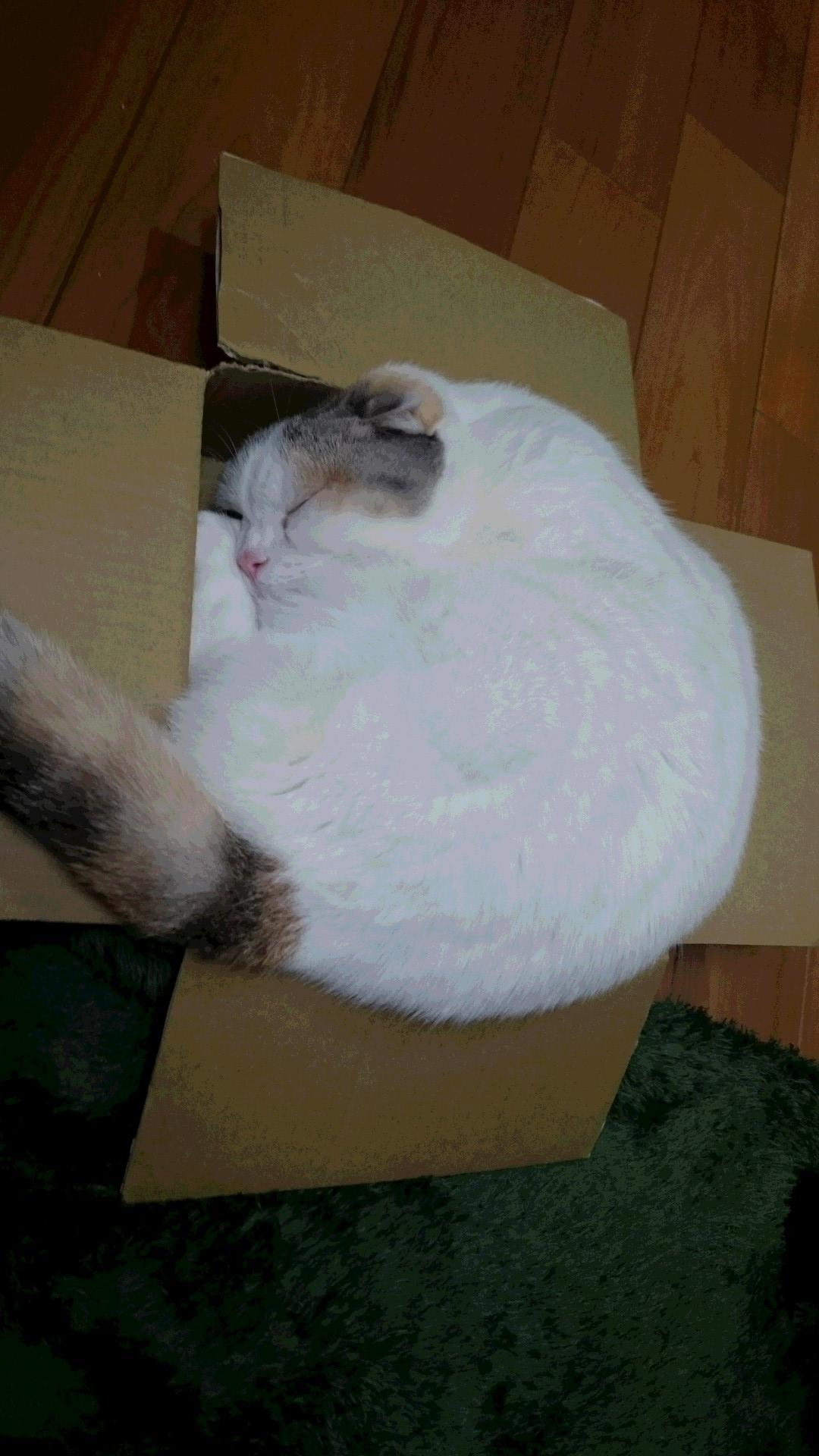ももにゃんの箱1