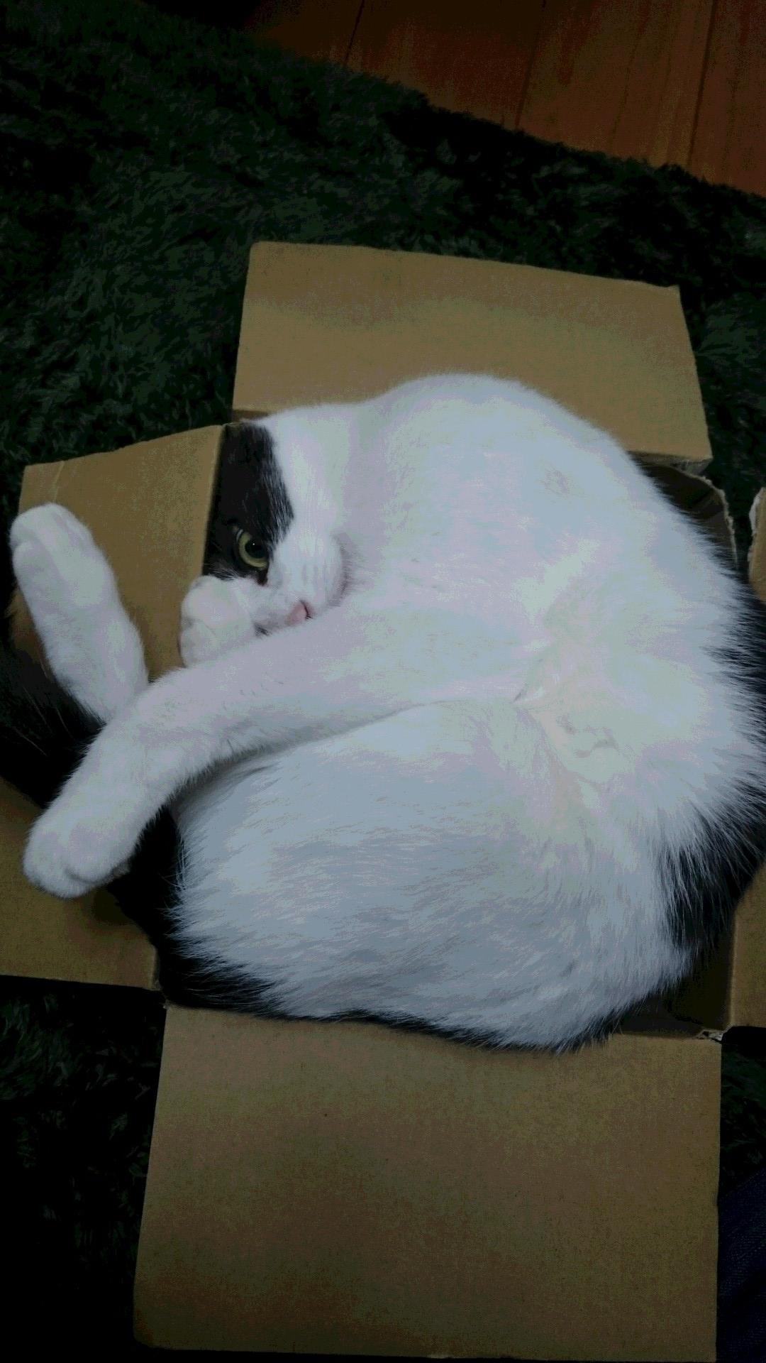 空くんの箱1
